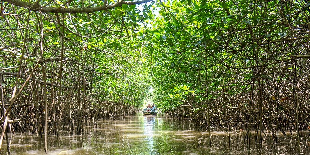 Drift boat in the Mangroves of Savegre