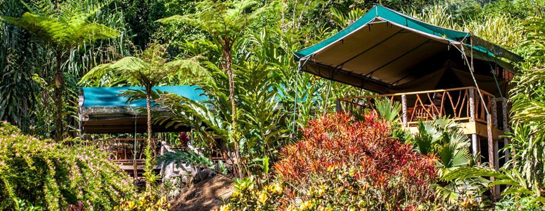 Luxury Camping at Rafiki Safari