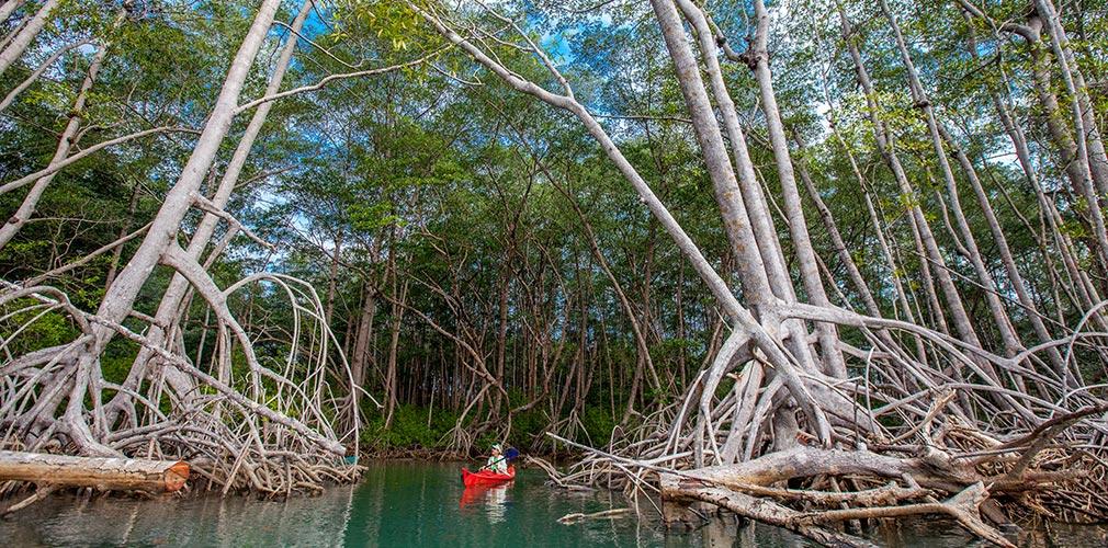 Kayak trip Rio Savegre
